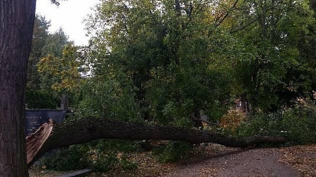 S mnohačetnými zraněními skončila v nemocnici žena, na kterou ve čtvrtek odpoledne spadl strom na Ústředním hřbitově v Brně.