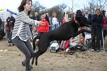 Sobotní otevření výběhu se neslo v duchu soutěží a ukázek psích sportů, jako jsou třeba dogdancing, agility nebo dogfrisbee.