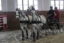 Na Veterinární a farmaceutické univerzitě se v sobotu proháněly koně při závodech vozatajů.