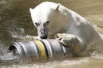 Pracovníci zoo zpestřili den ledním medvědům takzvaným enrichmentem.