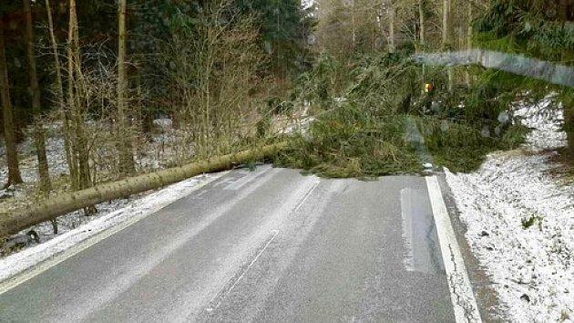 Kvůli silnému větru padaly v noci na neděli na jižní Moravě stromy.