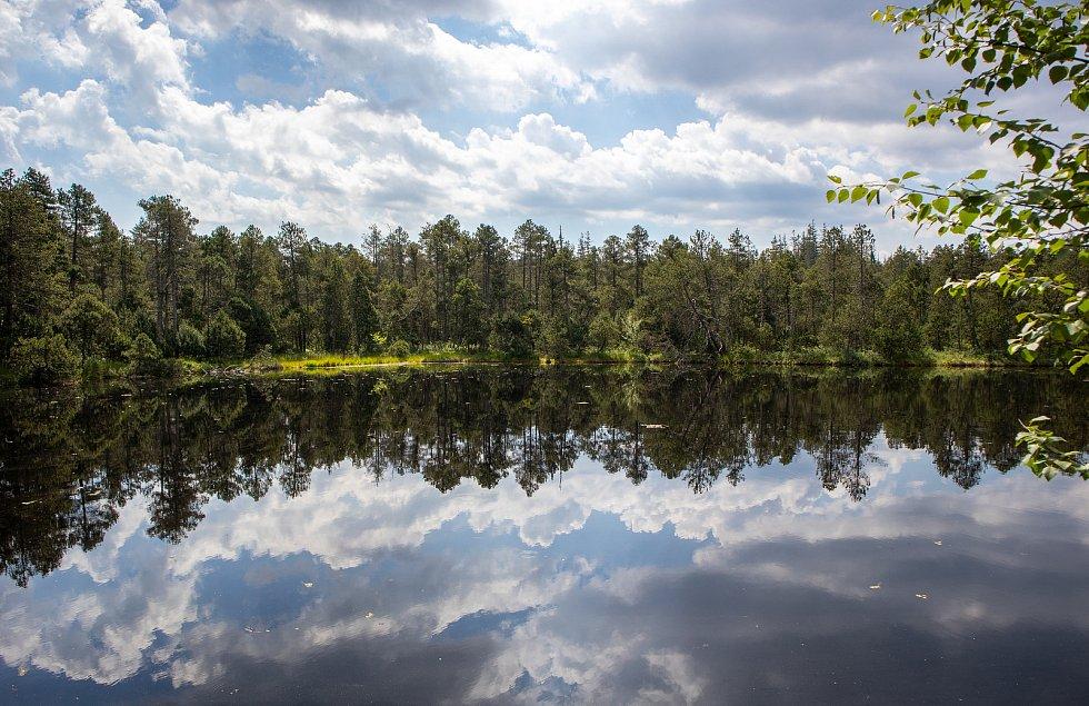 Rejvíz je největší rašeliniště ve Slezsku a na Moravě a leží v Jeseníkách.