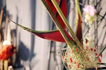 Výstava - 50 druhů chryzantém