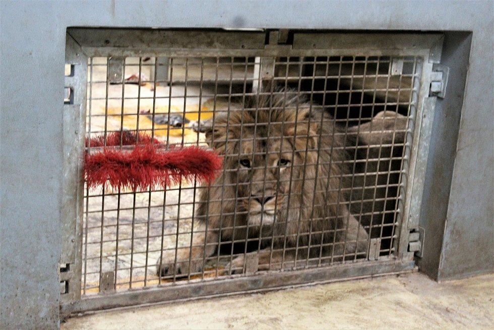 V brněnské zoo je Štědrý den pro zvířata jako každý jiný. Letos ovšem poprvé bez návštěvníků kvůli koronaviru.