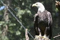 Zoo otevřela novou voliéru pro orly.