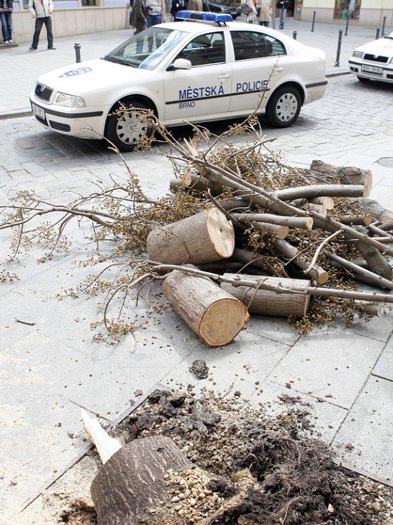 Spadlý strom na Šilingrově náměstí.