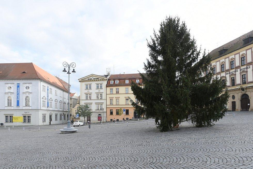Brno 17.11.2020 - na Zelném trhu už stojí vánoční strom