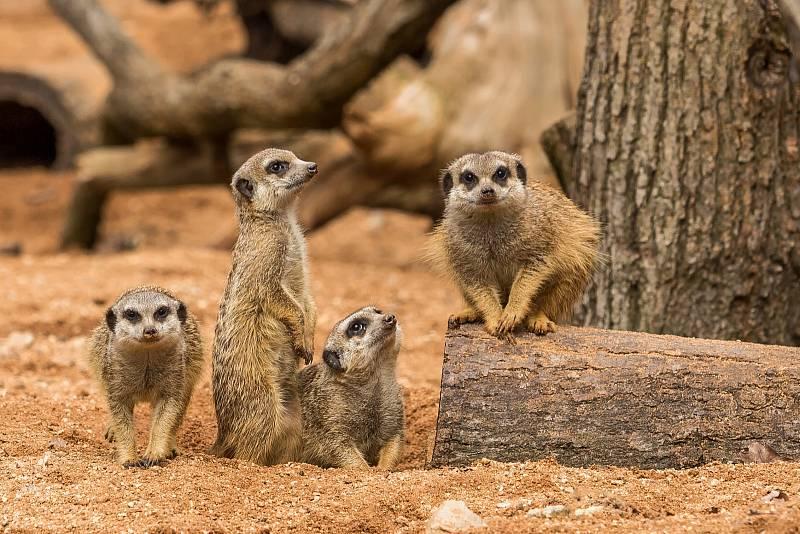 Pohled na život zvířat v brněnské zoologické zahradě.