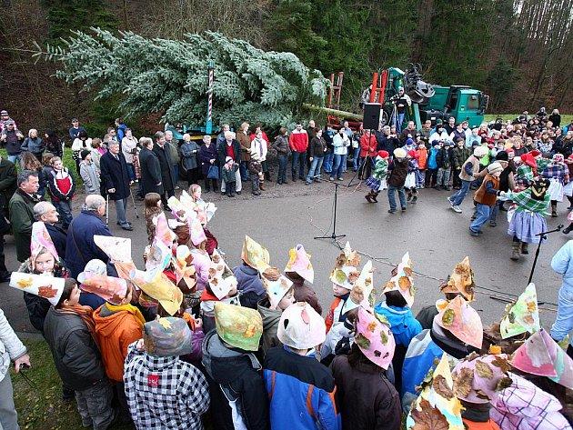Dvanáctimetrová jedle ojíněná z lesů u Bílovic nad Svitavou bude stát na náměstí Svobody v Brně.
