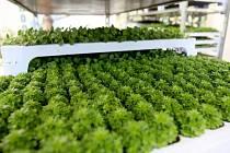 Dvanáctý ročník největšího zahradnického a floristického veletrhu Zelený svět hostí v pátek a v sobotu brněnské výstaviště.