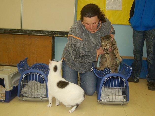 PROVOZOVATELKA útulku pro kočky Alexandra Jančová  říká, že osud otulavých koček je radnicím  v kraji většinou lhostejný a problém neřeší.