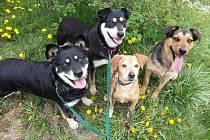 Opuštění psi z Nového Sedla už jsou v dobrých rukou