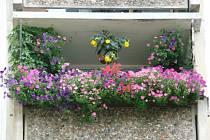 Jeden z kvetoucích balkonů v Sokolově