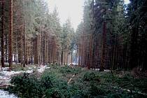 Vlekaři se pustili do kácení lesa.