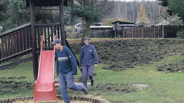 Z hřiště je oraniště. Tak dopadlo hřiště po řádění divočáků, kteří v Královském Poříčí rozrývají upravené trávníky.