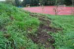 Areál sportu a zdraví v Sokolově navštívila divoká prasata