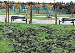 Divočáci řádí u parku Bohemia. V pozadí multifunkční hřiště