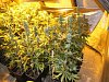 Marihuanu nalezli policisté v opuštěném domě.