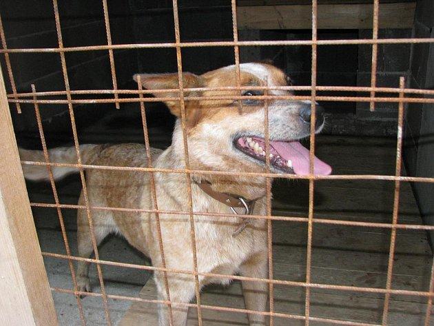 V útulku Pavlínčina fauna se starají o opuštěné psy a kočky. Zařízení zároveň funguje jako psí hotel. Nové vytápění by mělo ulehčit život zvířatům z ulice i mazlíčkům, jejichž pánové odjeli na dovolenou.