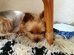 Podle slov veterináře si zvíře v tomto horkém počasí doma najde kout, kde je mu dobře. Venku i doma musí mít pořád dostatek vody.