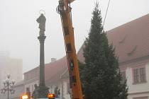 Usazení vánočního stromu v Sokolově.