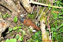 DETEKTOREM kovu nalezl muž v korytu řeky Svatava dělostřeleckou minu.