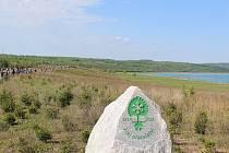 Alej přátelství u jezera Medard v Sokolově byla zasazena v loňském roce.
