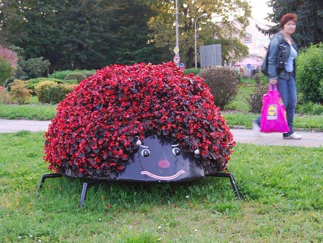 Květináče ve tvaru obřích berušek jsou umístěné před kruhovým objezdem přímo v centru Sokolova