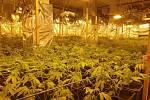 Jedna z největších indoorových pěstíren konopí v Karlovarském kraji odhalena