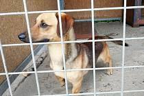 NAVŠTÍVIT opuštěné psy mohou zájemci i v době rekonstrukce chodovského záchytného zařízení.