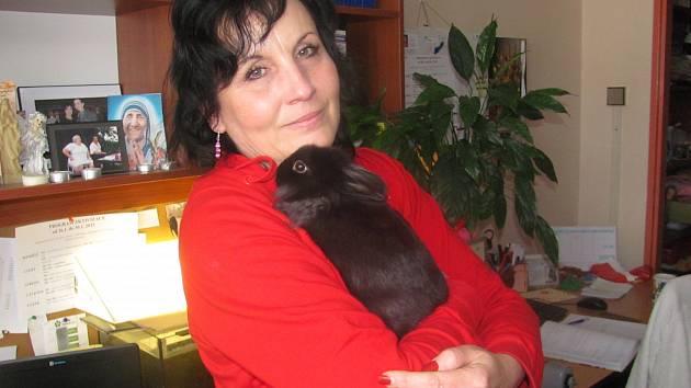 KRÁLÍČEK Briketka je v Sociálních službách zatím celkem nováčkem. Pomazlení s králičí slečnou pomáhá klientům rozpovídat se o svých splínech a životních příbězích.