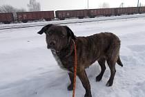Pachatel zabalil zraněné zvíře do pytle a zasypal sněhem.