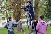 Velikonočními vajíčky ozdobili strom před školou ve Švabinského ulici v Sokolově žáci osmého ročníku.