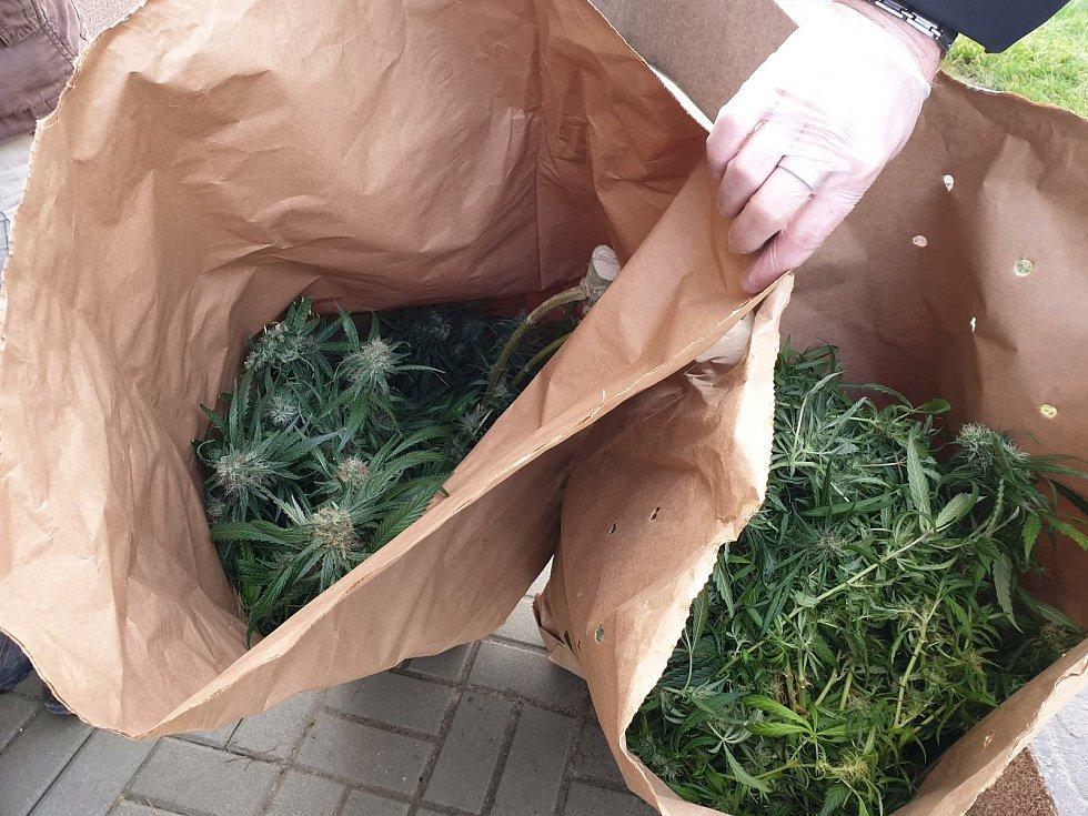 Další pěstírnu konopí odhalili sokolovští kriminalisté v rodinném domě v jedné z menších obcí na Sokolovsku. Konopí tam měla od začátku roku 2018 pěstovat třiatřicetiletá žena s šestačtyřicetiletým mužem.