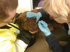 Pes skončil v péči veterinářky.