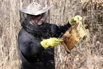 Včelařů v kraji už díky příspěvkům neubývá.