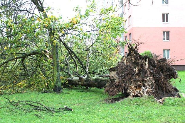 VChodově strhla vichřice střechu panelového domu a polámala stromy.