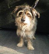 Pes po zesnulé mamince, nebo tulák od bezdomovce?
