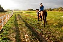 POSLEDNÍ podzimní teplé dny jsou skvělou příležitostí pro procházky v přírodě. Nebo i projížďky na koni.