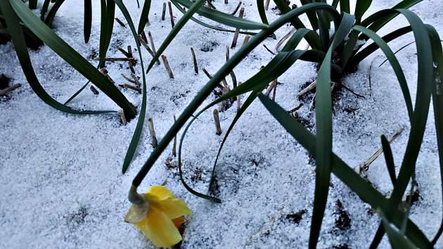 Zima to ještě nevzdává, na Kraslicku napadl sníh.