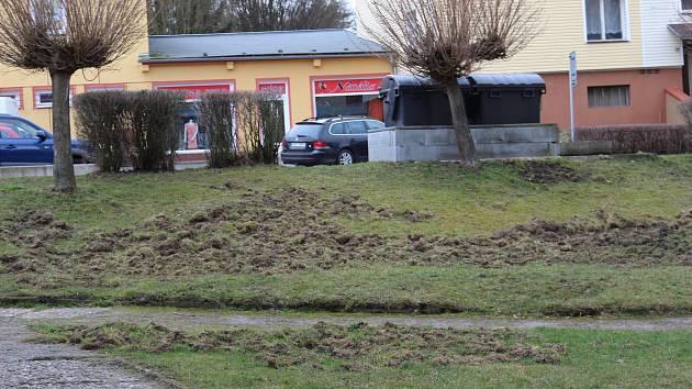 Pozemky mezi paneláky jsou zryté od prasat.