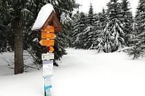 V bílé stopě si běžkaři užívají ideálních lyžařských podmínek.