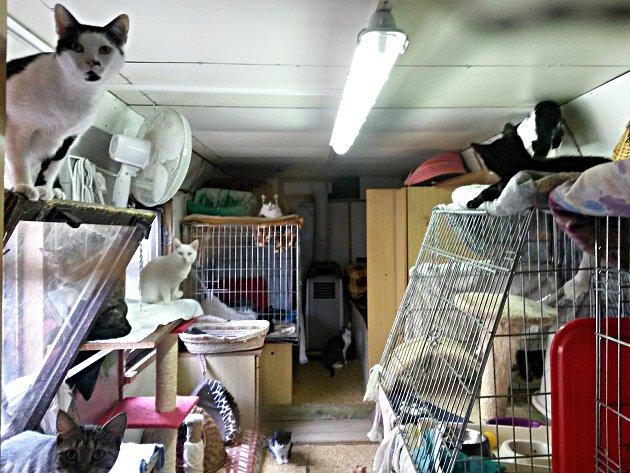 Opuštěné sokolovské kočky