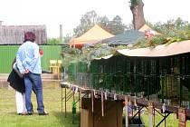 NÁVŠTĚVNÍKY chovatelské výstavy čeká obrovská rozmanitost zvířat, soutěže, občerstvení i unikátní podívaná v podobě disciplíny králičí hop.  Vystaveny tu ale budou třeba i historické motocykly a traktory.