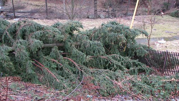 Popadané stromy.