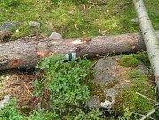 Dva stromy s turistickou značkou padly k zemi pod vrcholem Krudumu.