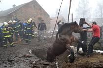 Záchrana koně.