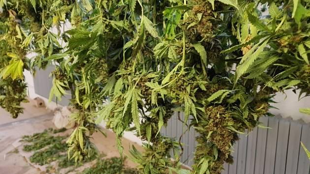 Zajištěné rostliny.