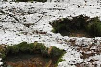 Malá přírodní památka Milhostovské mofety se nachází u Mariánských Lázní.