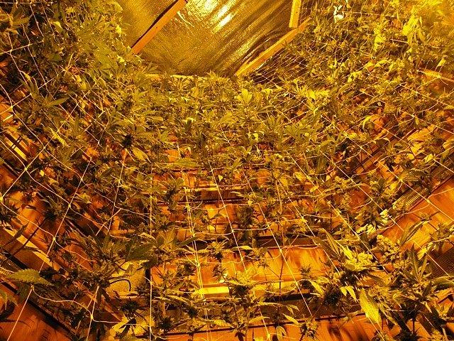 Pěstírna konopí v Kraslicích